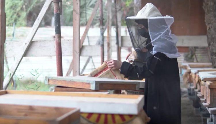 تعتمر السعودية فاطمة الميلاد (19 عاما) قبعة الحماية خلال عملها في تربية النحل